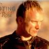 Sting – Desert Rose